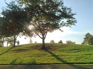 緑の丘1.jpg